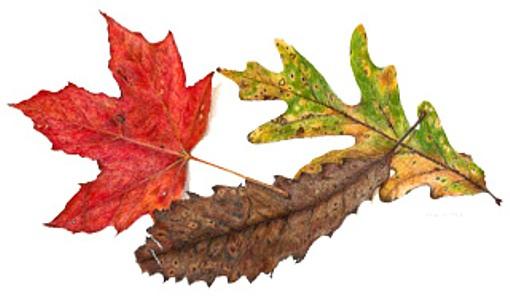 Colors of Fall, copyright Mary Ann Jimenez