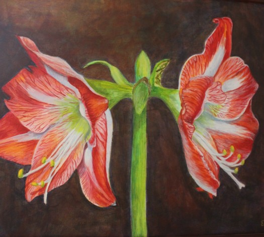 Detail of Amaryllis, copyright Evalyn Holy