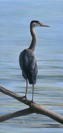 Great Blue, copyright D. Fisk