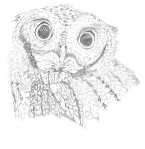 Owl, copyright Evalyn Holy