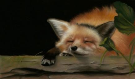 Red Fox, copyright D. Fisk