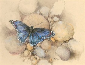Red-Spotted Purple Butterfly, copyright Peggy McGahan