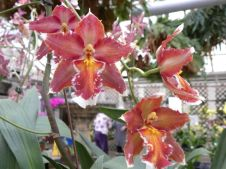 Nature Arists' Guild of The Morton Arboretum at Orchids by Hausermann