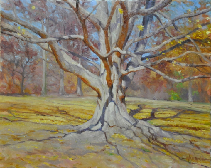 Arboretum Maple © Scott Harding