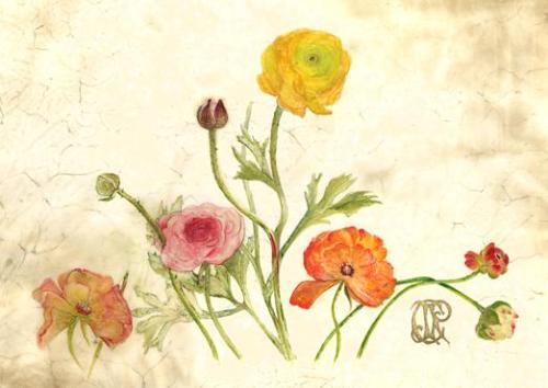 Ranunculus, © Carol Jean Rogalski, Watercolor and 23k gold on Vellum