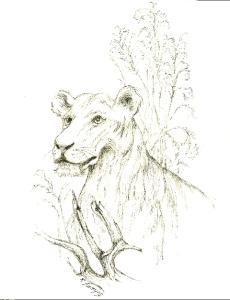 Lion ©Bob Sunyog