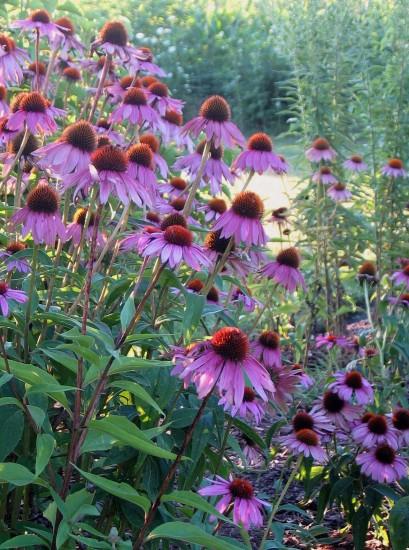 Laverne Bohlin Garden
