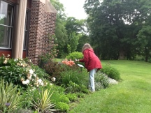 Nature Artists' Guild at Mayslake Peabody Estate 2014 11