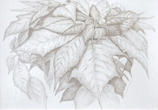 Silverpoint drawing, copyright Mary Ann Jimenez