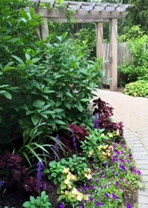 Fragrance Garden at The Morton Arboretum