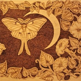 Detail of Moth pyrography, copyright Gail Diedrichsen