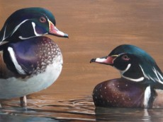 Wood Ducks, copyright Lindsay Sandbothe