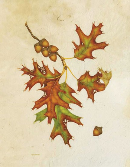 Red Oak, Quercus rubra, ©Wendy Brockman. Used with permission.