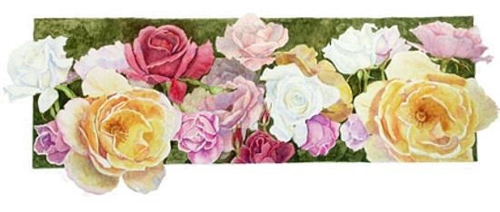 Roses, copyright Evelyn Grala