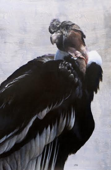 Andean Condor, ©Lindsay Sandbothe