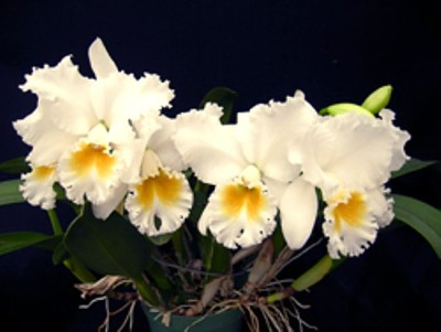 Photo credit Orchids by Hausermann