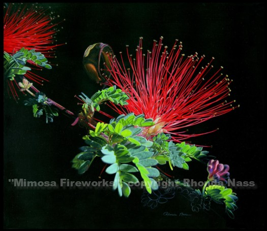 Mimosa Fireworks, Acrylic, copyright Rhonda Nass. Used with permission. Text not part of original image.
