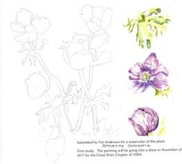 anemone-coronaria-copyright-pat-anderson