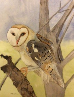 barn-owl-copyrightl-jean-black