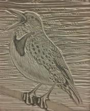 bird-copyright-carrie-carlson