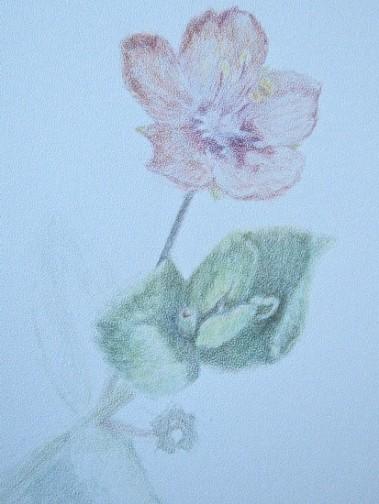 flower-study-on-stipple-texture-copyright-carla-schmakel