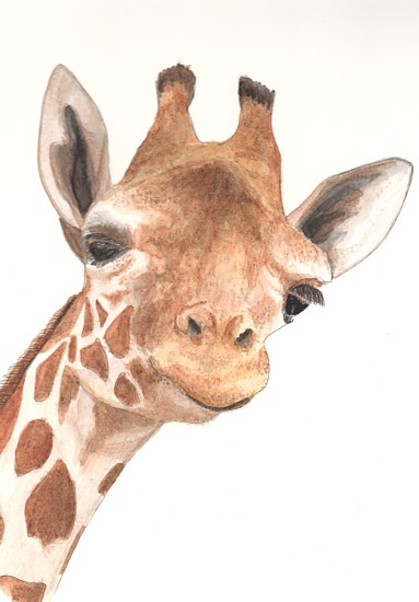 Giraffe, copyright Alice Wych