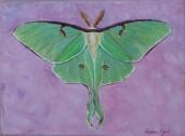 luna-moth-copyright-susan-vogel