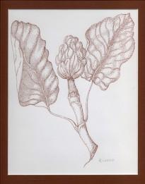 Magnolia, copyright Linn Eldred