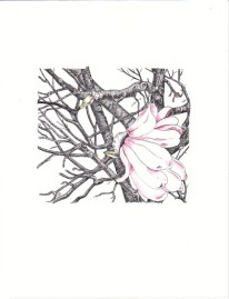 magnolia-ink-colored-inks-copyright-nancy-thyfault