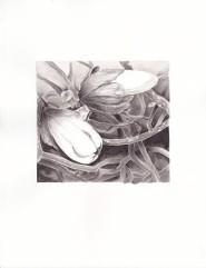 magnolia-ink-ink-wash-copyright-nancy-thyfault