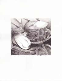 magnolia-ink-ink-wash-copyright-nancy-thyfault
