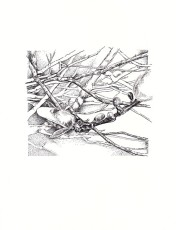 magnolia-pen-ink-copyright-nancythyfault