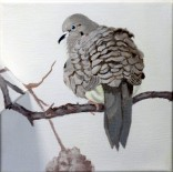 mourning-dove-copyright-evelyn-grala