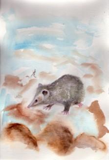 opossum-copyright-2-17-17-fran-kelly