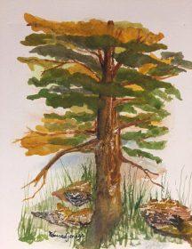 redwood-copyright-rebecca-janega