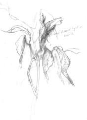 swamp-milkweed-in-winter-sketch-copyright-fairbanks