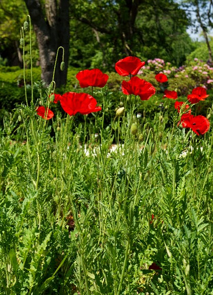 Going Back for More at the Gardens at Cantigny Park – Nature Artists ...