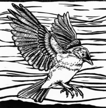 Bluebird landing linoleum cut, copyright Carrie Carlson.