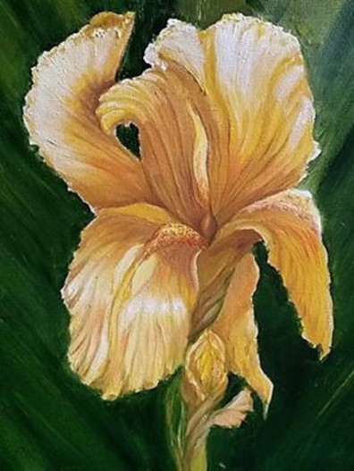 Yellow iris in oil, copyright Kathi Kuchler.