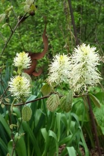 Flowers on Linda Hilderbrant's property