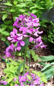 Wildflowers on Linda Hilderbrant's property