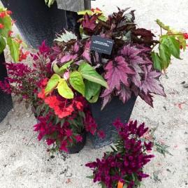 Ball Horticultural Arrangement