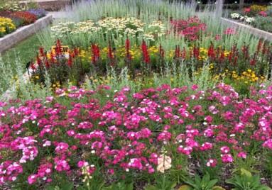 Ball Horticultural Flowers