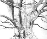 Graphite drawing, copyright 2019, Evelyn Grala