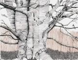 Tree, ink, copyright 2019, Evelyn Grala