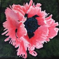 Mayslake Poppy, copyright Carol C. Carls