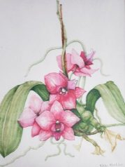 Pink Orchids and Stick, copyright Kathi Kuchler