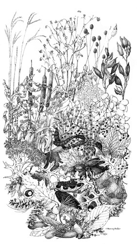 Autumn Prairie, pen and ink, copyright Nancy Kolar.
