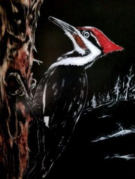 Pileated Woodpecker, copyright Jill Adzia