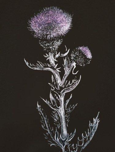 Thistle, copyright Jill Adzia